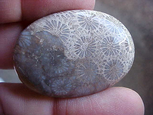 D1315 GemQz Coral Fossil AGATE Oval Cabochon INDONESIA !!