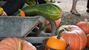 Jardins anciens et bien-être à Bergues
