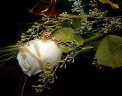 _IGP9833 bWhite Rose
