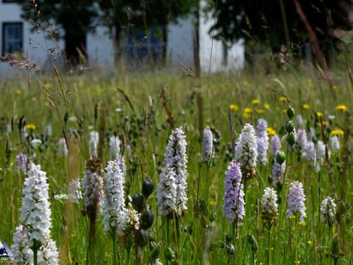 Wild Gardens...