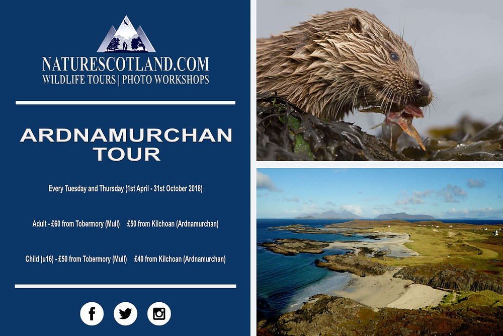 Ardnamurchan, Ardnamurchan wildlife, Nature Scotland
