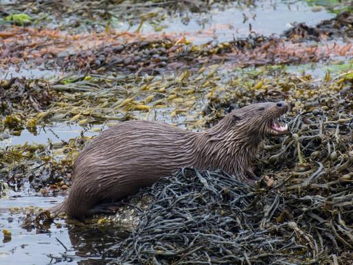 Getting Otter again?