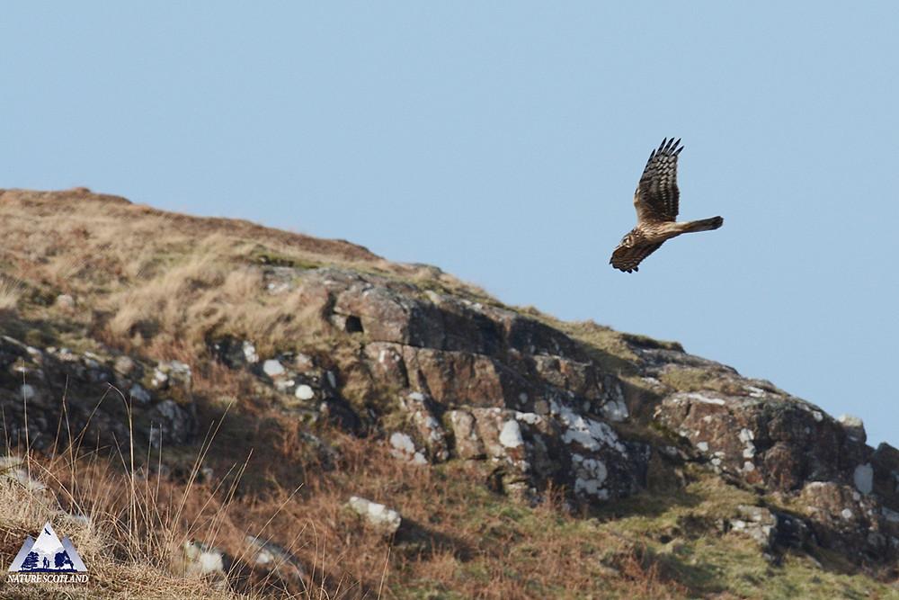 Mull Wildlife Tours, Nature Scotland, Ewan Miles, Photography, Mull, Wildlife,