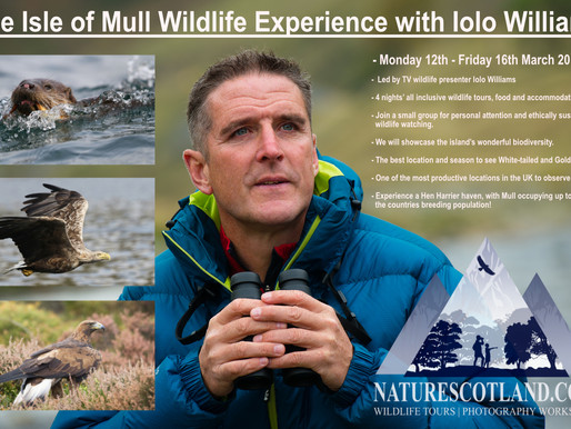 The Isle of Mull Wildlife Experience with Iolo Williams 2018
