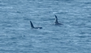 ORCAS - Always Expect the Unexpected!!