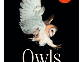 Owls a guide to every species by MarianneTaylor