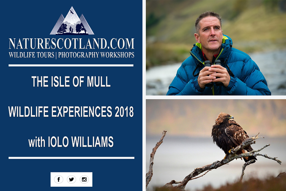 iolo williams, mull, isle of mull, nature scotland, mull wildlife, wildlife tour,