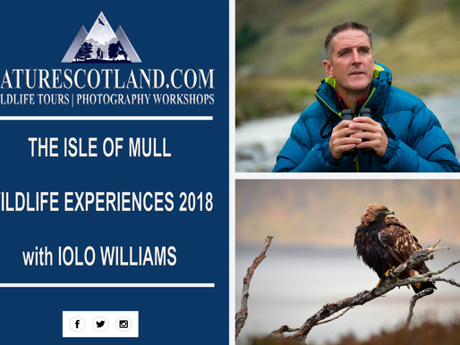 THE ISLE OF MULL WILDLIFE EXPERIENCES WITH IOLO WILLIAMS 2018