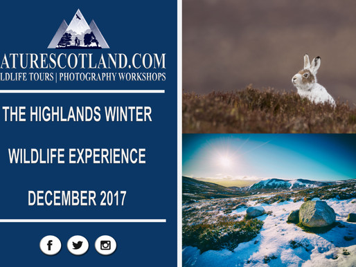 THE HIGHLANDS WINTER WILDLIFE EXPERIENCE 2017