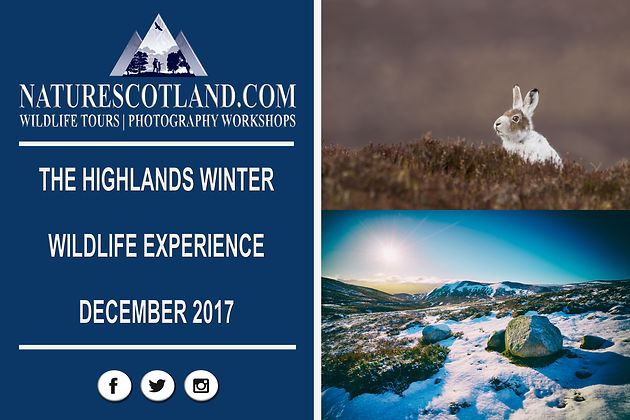THE HIGHLANDS WINTER WILDLIFE EXPERIENCE 2017   Nature