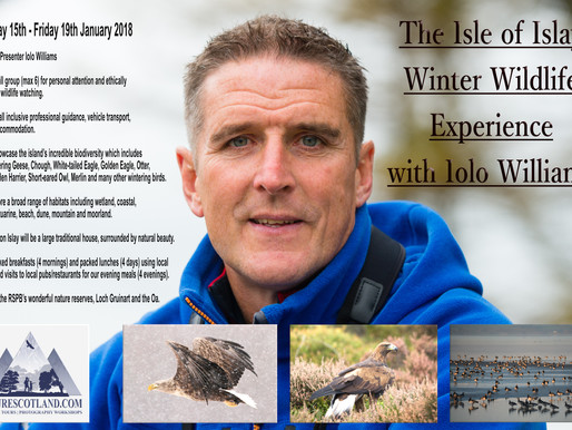 THE ISLE OF ISLAY WINTER WILDLIFE EXPERIENCE WITH IOLO WILLIAMS