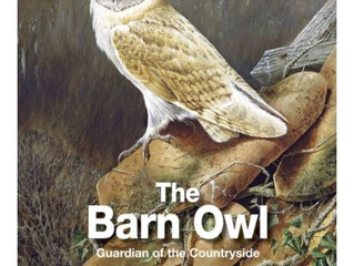 The Barn Owl –Guardian of the Countryside By Jeff R Martin