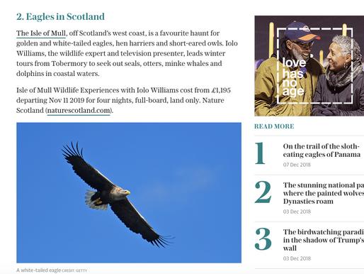 Voted 2nd best winter wildlife experience, worldwide!
