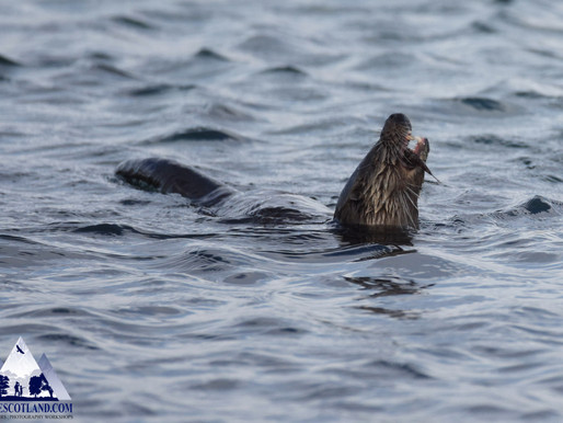 Otters...