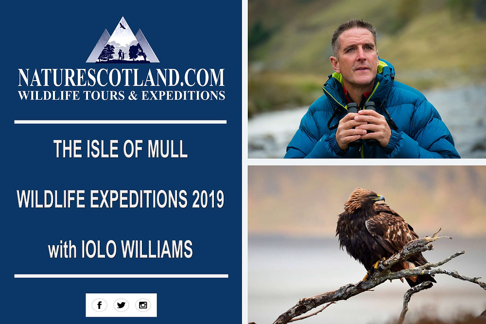 iolo williams, isle of mull, mull, wildlife holidays,