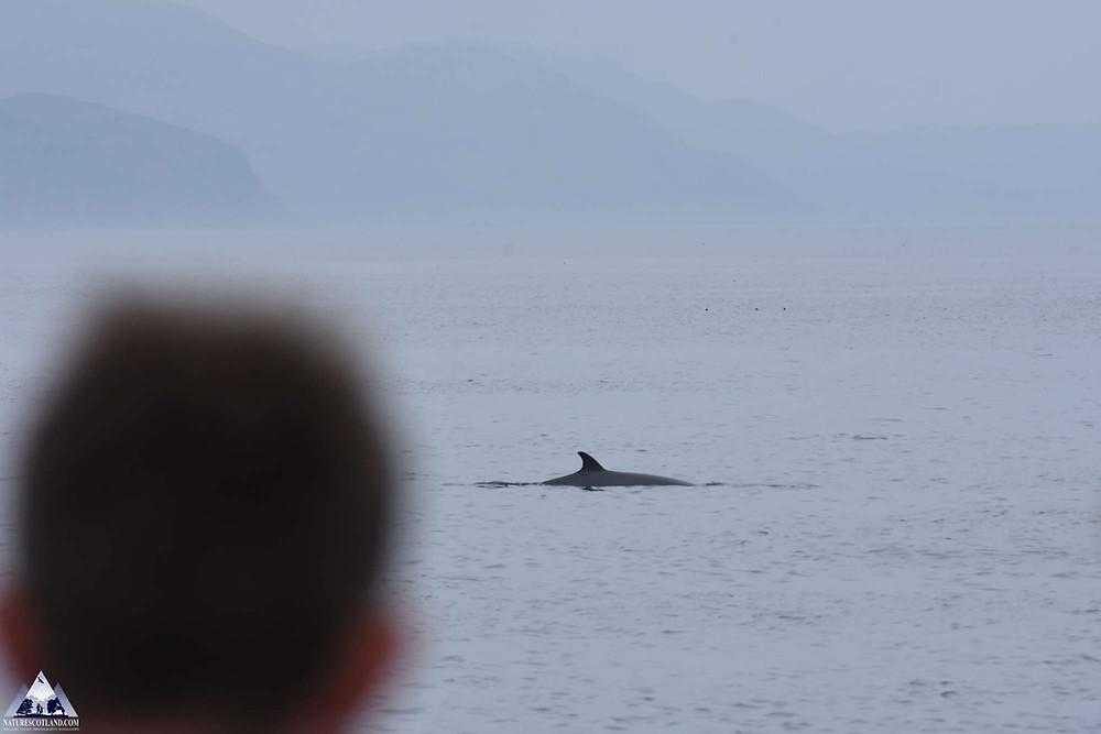 Mull, Isle of Mull, Nature Scotland, Mull Wildlife,