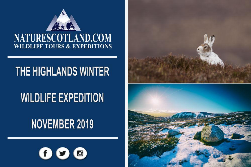 Cairngorms, Nature Tourism, Winter Wildlife, Winter Scotland,