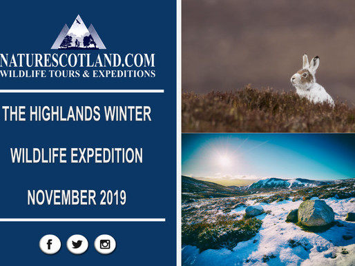 The #Highlands Winter Wildlife Expedition 2019