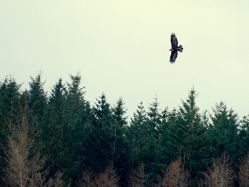 Eagle Days...
