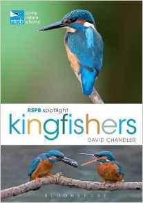 kingfishers_edited