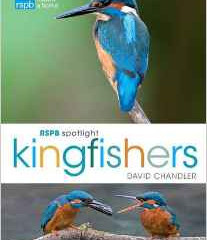 RSPB Spotlight series – Kingfishers by David Chandler