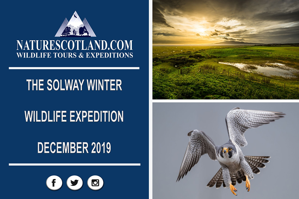Solway, Solway Wildlife, Nature Scotland,