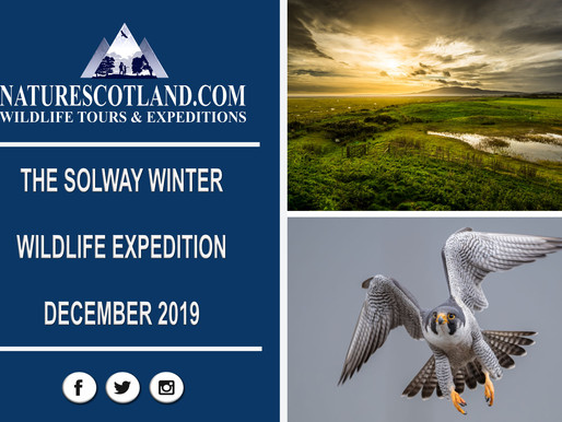 THE SOLWAY WINTER WILDLIFE EXPEDITION 2019