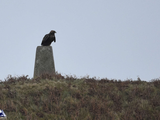 King of the Trig point!