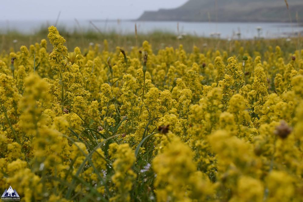 Mull, Isle of Mull, Mull Wildlife, Mull Wildlife Tours, Nature Scotland,