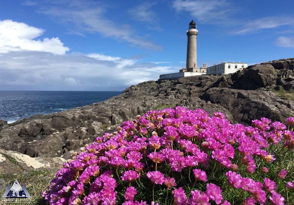 ardnamurchan, ardnamurchan tour, wildlife tour, nature scotland, wildlife,
