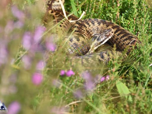 Reptiles rule...