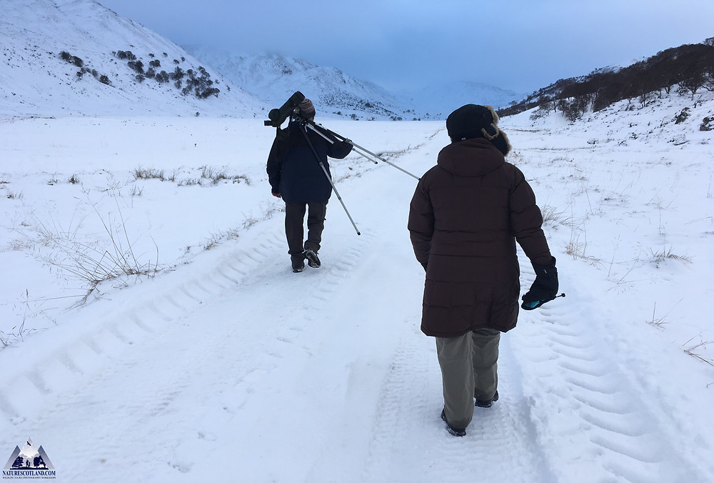 Nature Scotland, Winter Wildlife, WInter Tours,