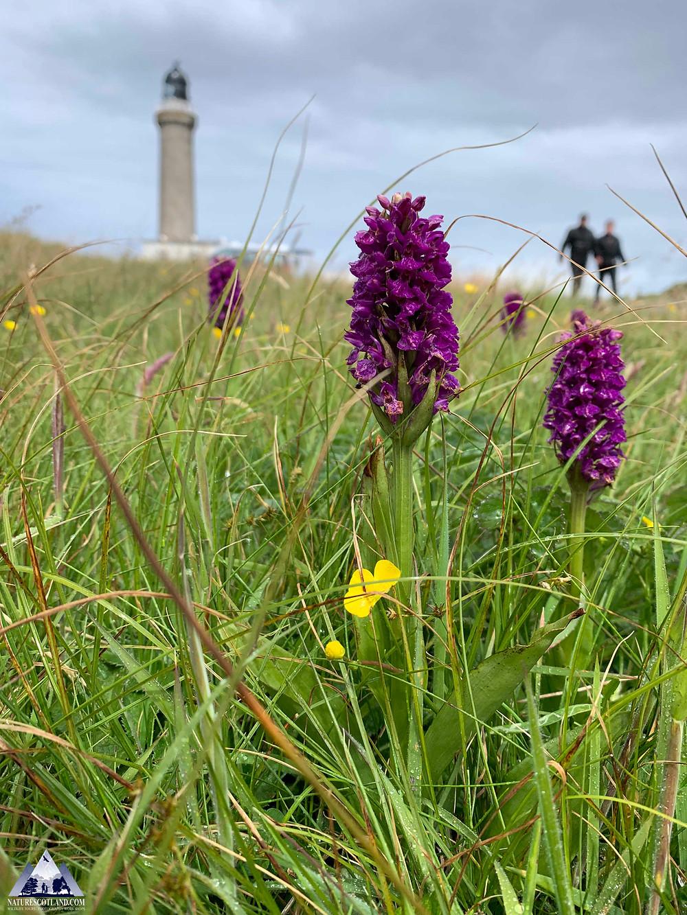 Ardnamurchan, Nature Scotland, Wildlife Tours, Mull