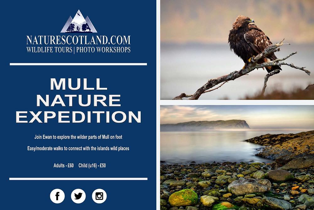Mull Nature Expedition, Mull, Isle of Mull, Nature Scotland, Mull Wildlife,