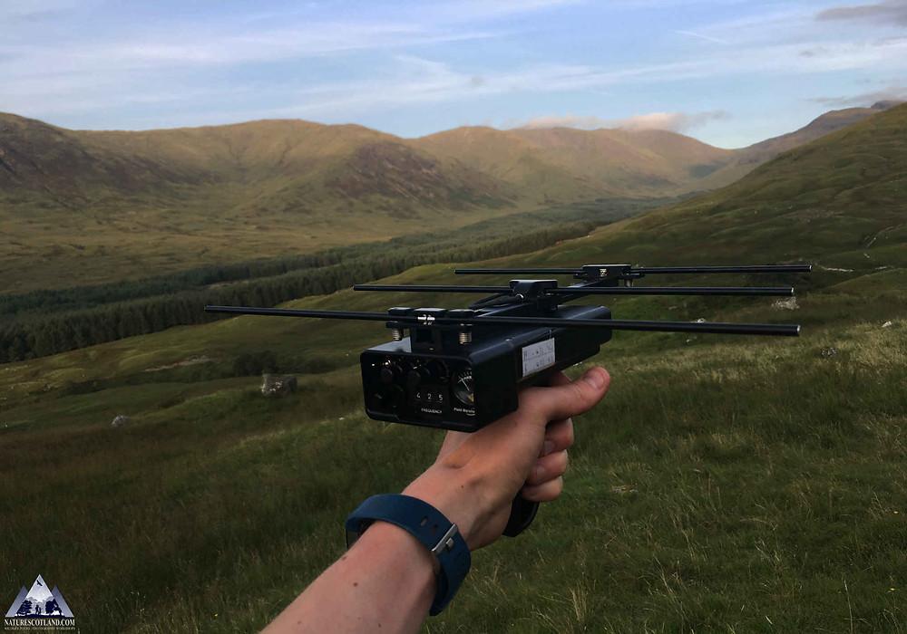Isle of Mull, Mull, Nature Scotland, Wildlife Tours, Hen Harriers,