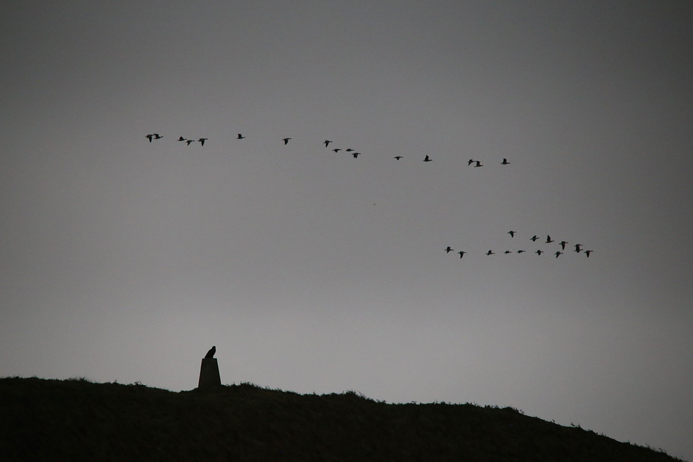 Islay, eagles, geese,
