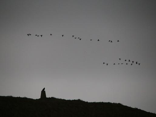 Predator and prey on #Islay...
