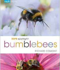 Bumblebees RSPB spotlight Series by Richard Comont