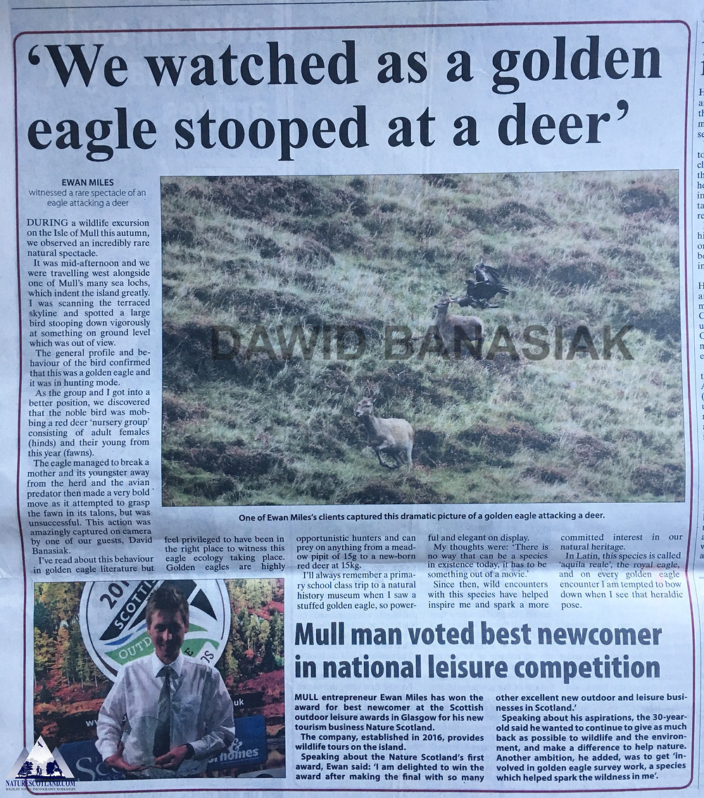 Golden Eagle, Nature Scotland, Nature Tourism, Wildlife Scotland,