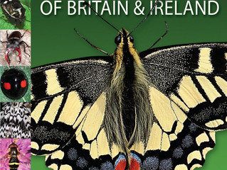 A comprehensive guide to the Insects of Britain and Ireland [2nd edition] by Paul D Brock
