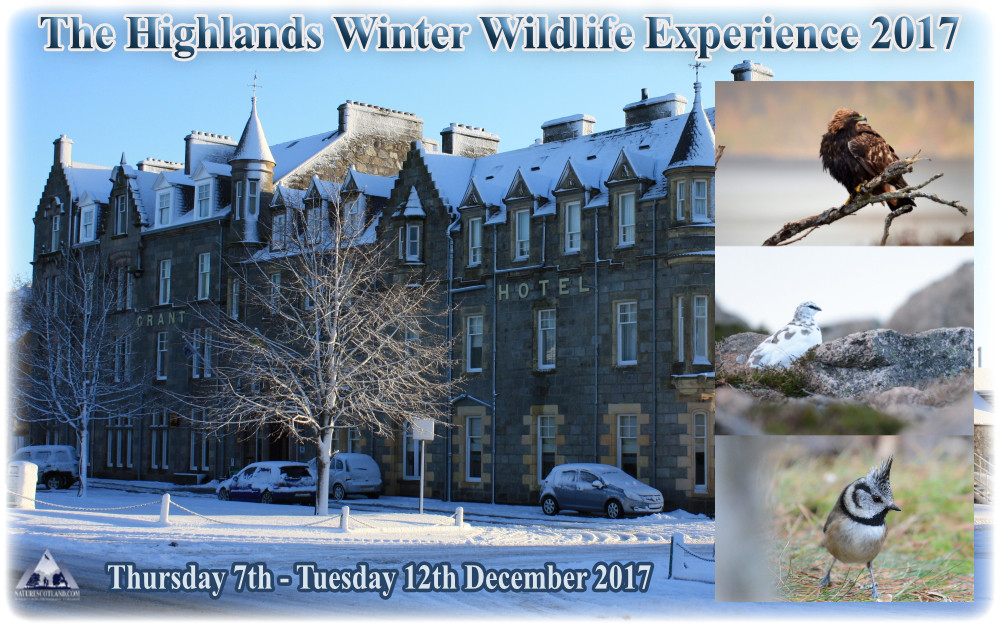 Cairngorms, winter wildlife, winter tours, christmas, highlands, winter, nature scotland,