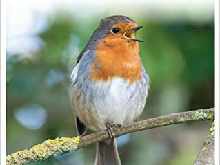 Britain's Birds – An identification guide to the birds of Britain and Ireland