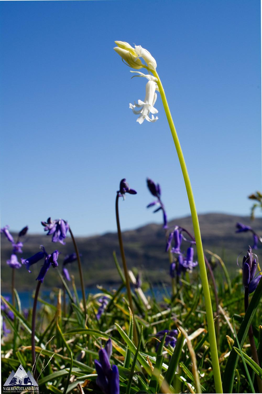 Isle of Mull, Photography Tour, Mull Wildlife Tours, Wildlife Tours, Ewan Miles
