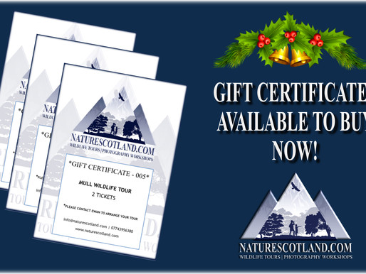 Gift Certificates available now!