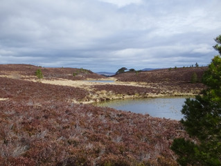 A bothy walk from Abernethy Forest