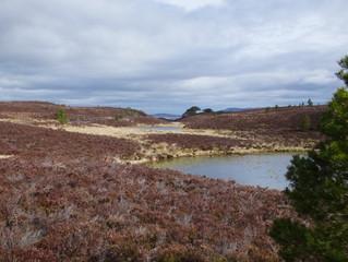A bothy walk from Abernethy Forest