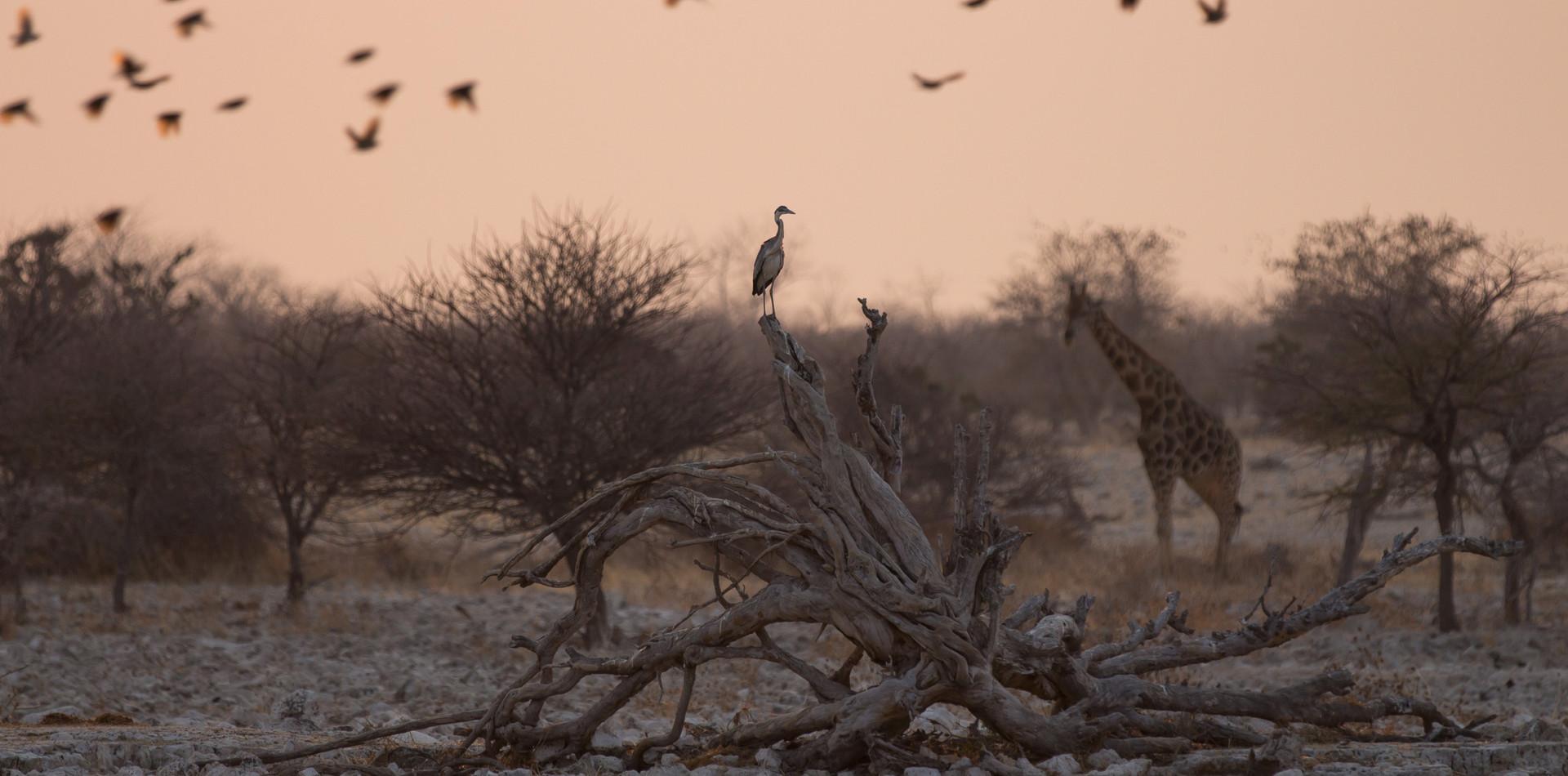 Namibian dusk