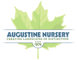 augustine-logo.png