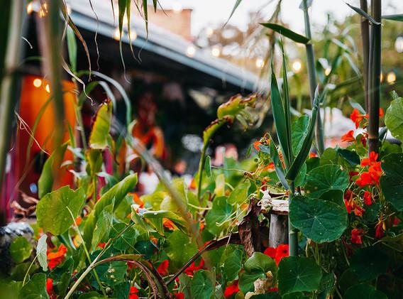 Thai Street Food Markets - Perth City Farm-7.jpg