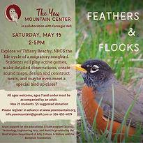 Feathers  Flocks.jpg